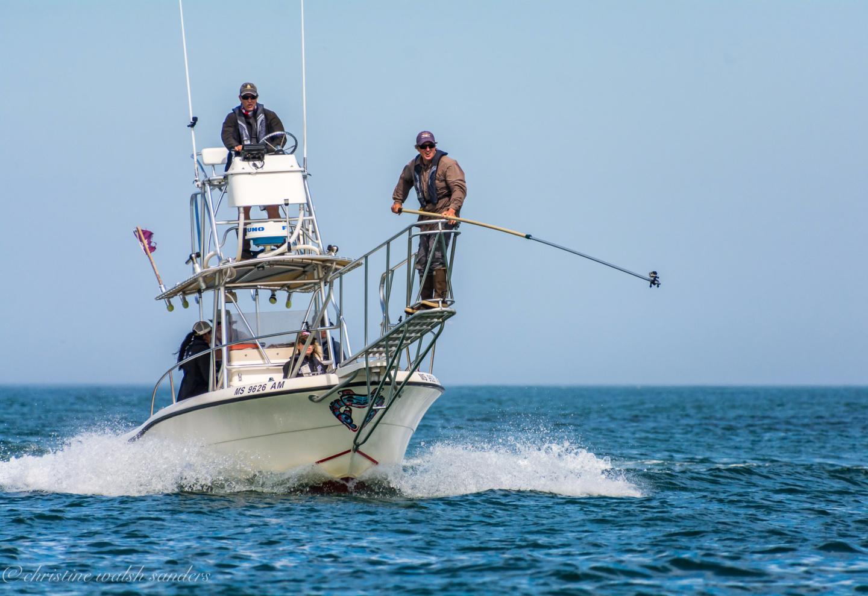 For Marine Biologist Greg Skomal Every Week Is Shark Week Innovasea